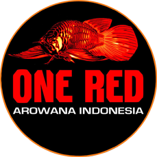 OneRed Arowana Indonesia